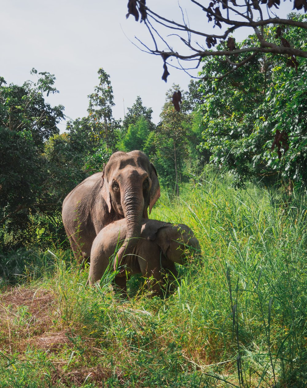 Why you should not invest in an elephant sanctuary in Thailand