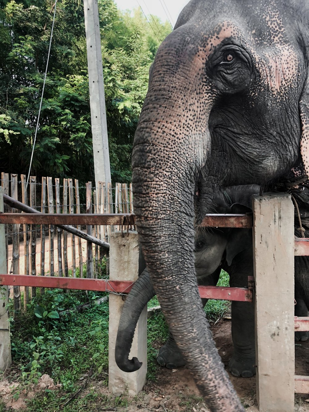 Why you shouldn't go to elephant sanctuaries in Thailand