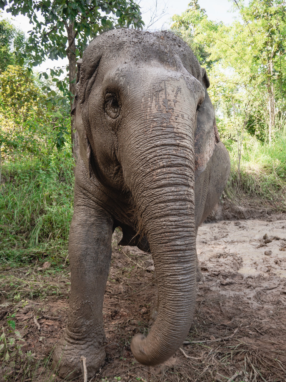 What you do at Maerim Elephant Sanctuary in Chiang Rai, Thailand