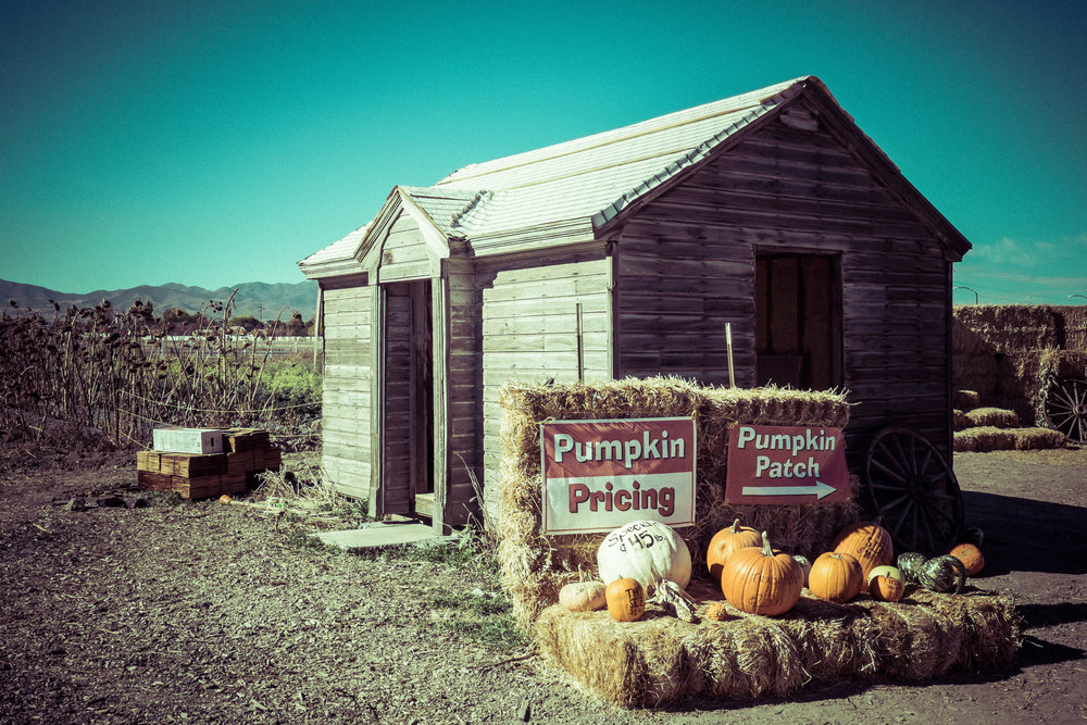 pumpkin_patch_4.jpg