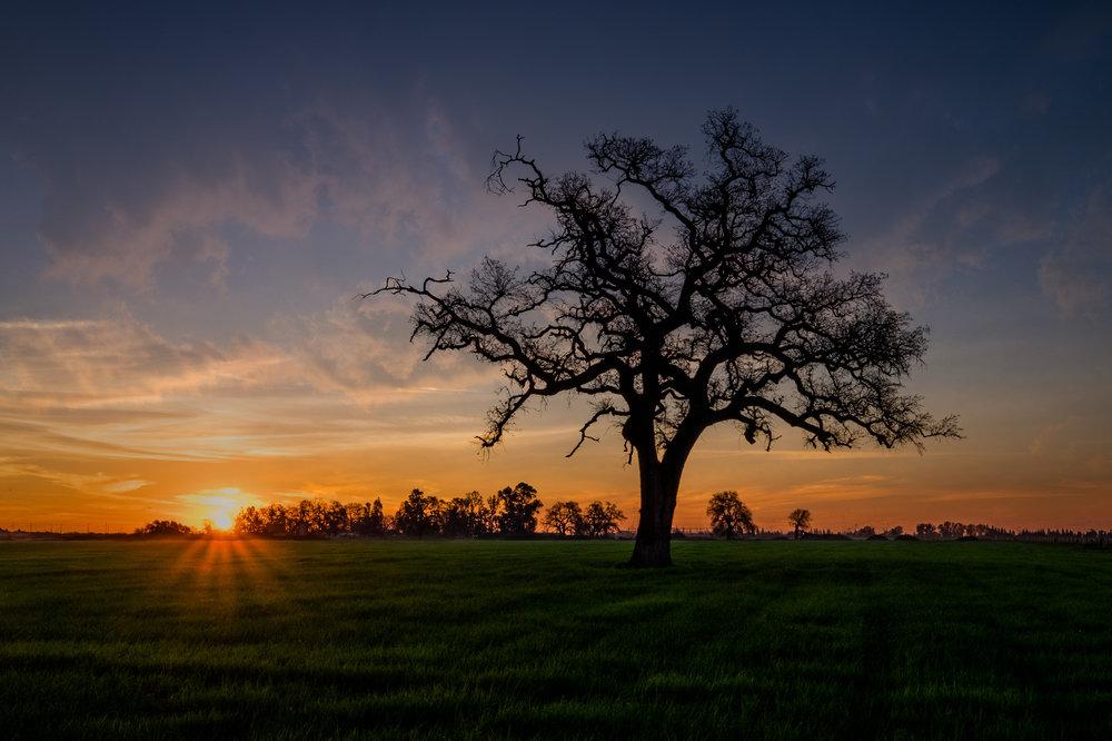 eg-sunset-tree_2016-02-15_3-2.jpg