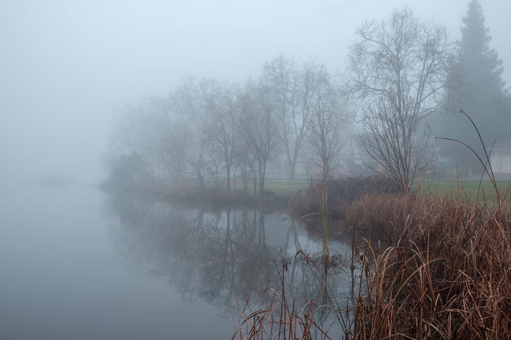 eg-fog_2019-01-10_11-Edit.jpg