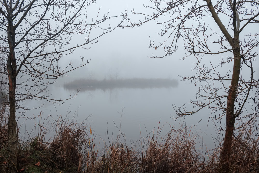 eg-fog_2019-01-10_09.jpg