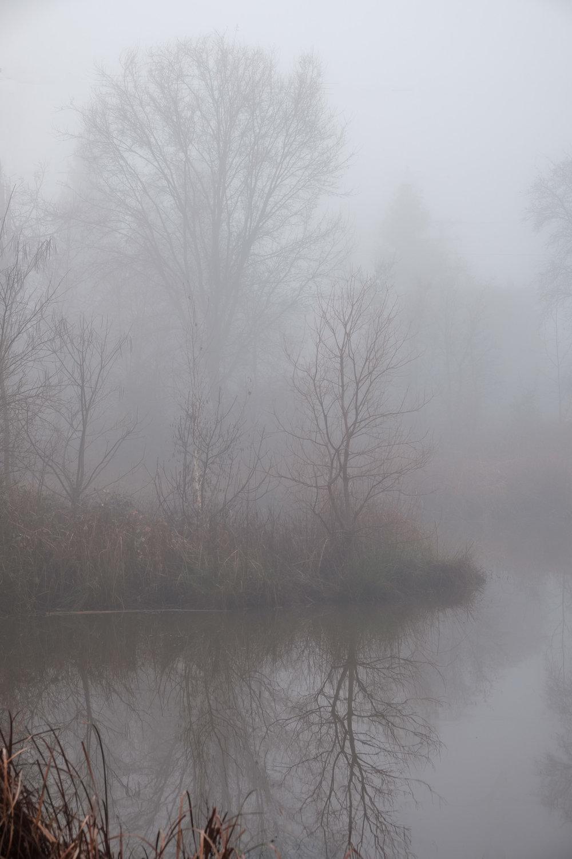 eg-fog_2019-01-10_12-Edit.jpg