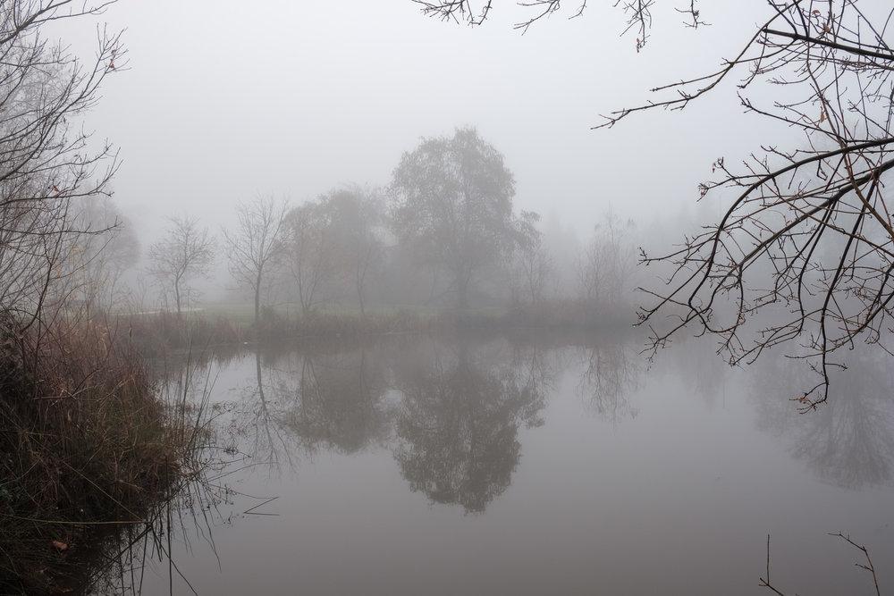 eg-fog_2019-01-10_17.jpg
