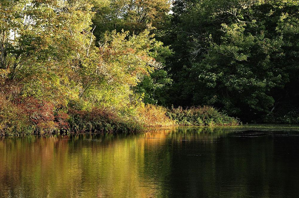 Mill-Pond-W.jpg