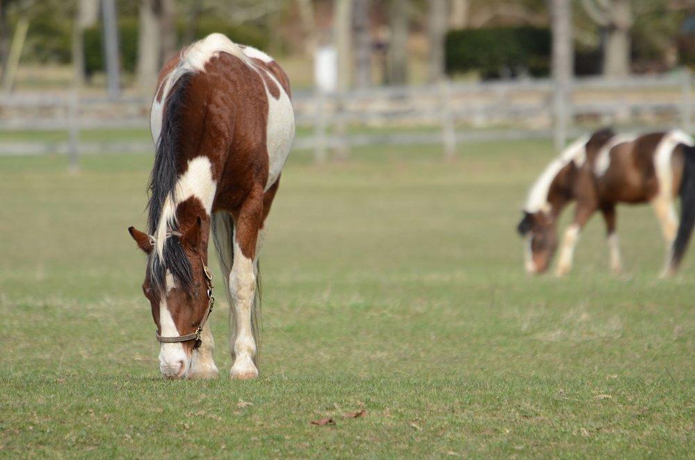 Horses W.jpg