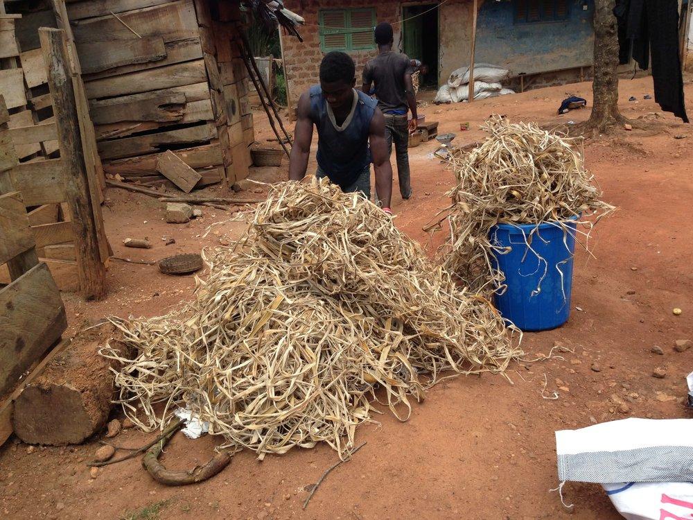dry harvested fiber2_T.JPG