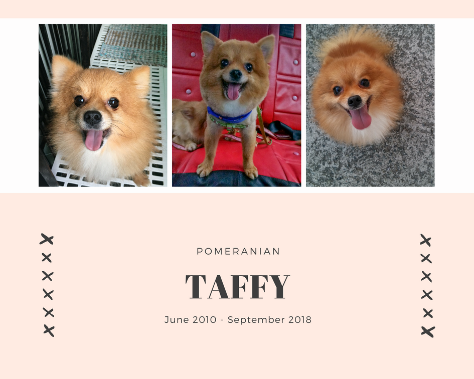 He's such a cute furball. I always feel a lot better every time I see him smile. He may be the oldest among my two other Pomeranians, but he's the smallest. -