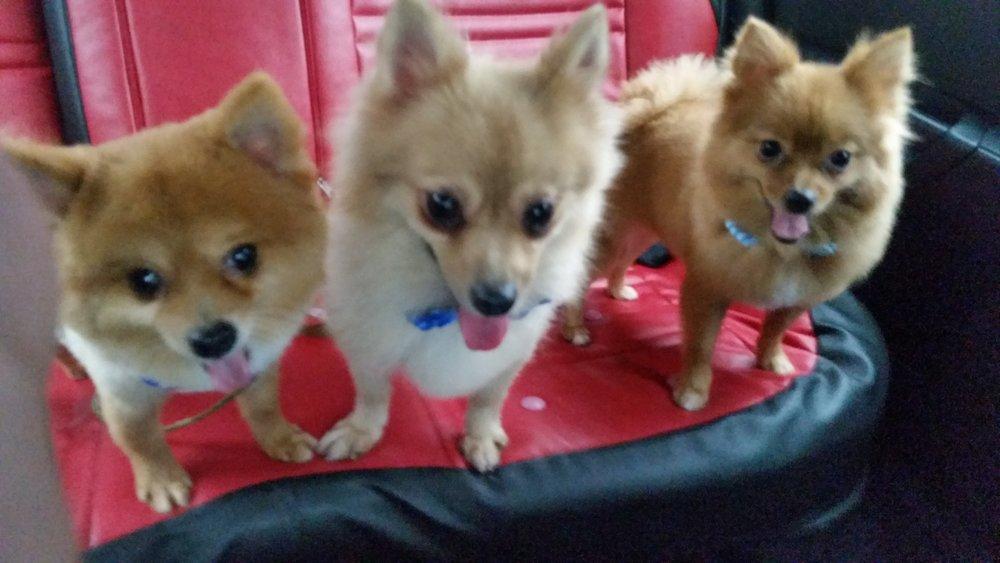 Taffy, Fifi & Aica.JPG