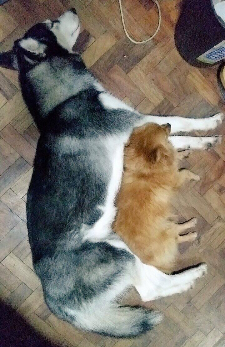 Yumi & Aica (2).JPG