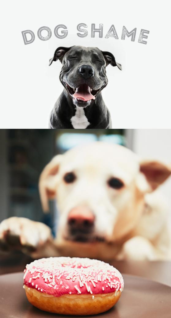 Dog Shame header.jpg