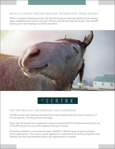 SentRx+Sales+Sheets+horse+border.jpg