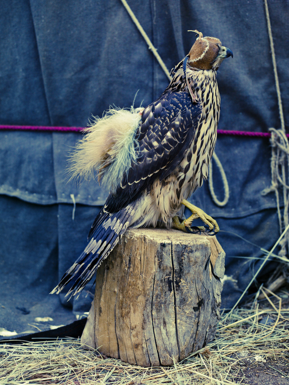 Eagle Hunter _2.jpg