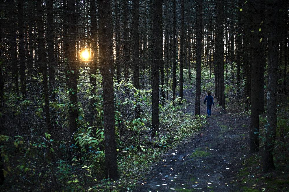 16-woods_6922-tif.jpg
