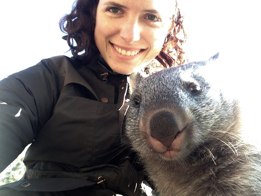 Naturally, I made friends with a baby wombat shortly after arriving in Tasmania.
