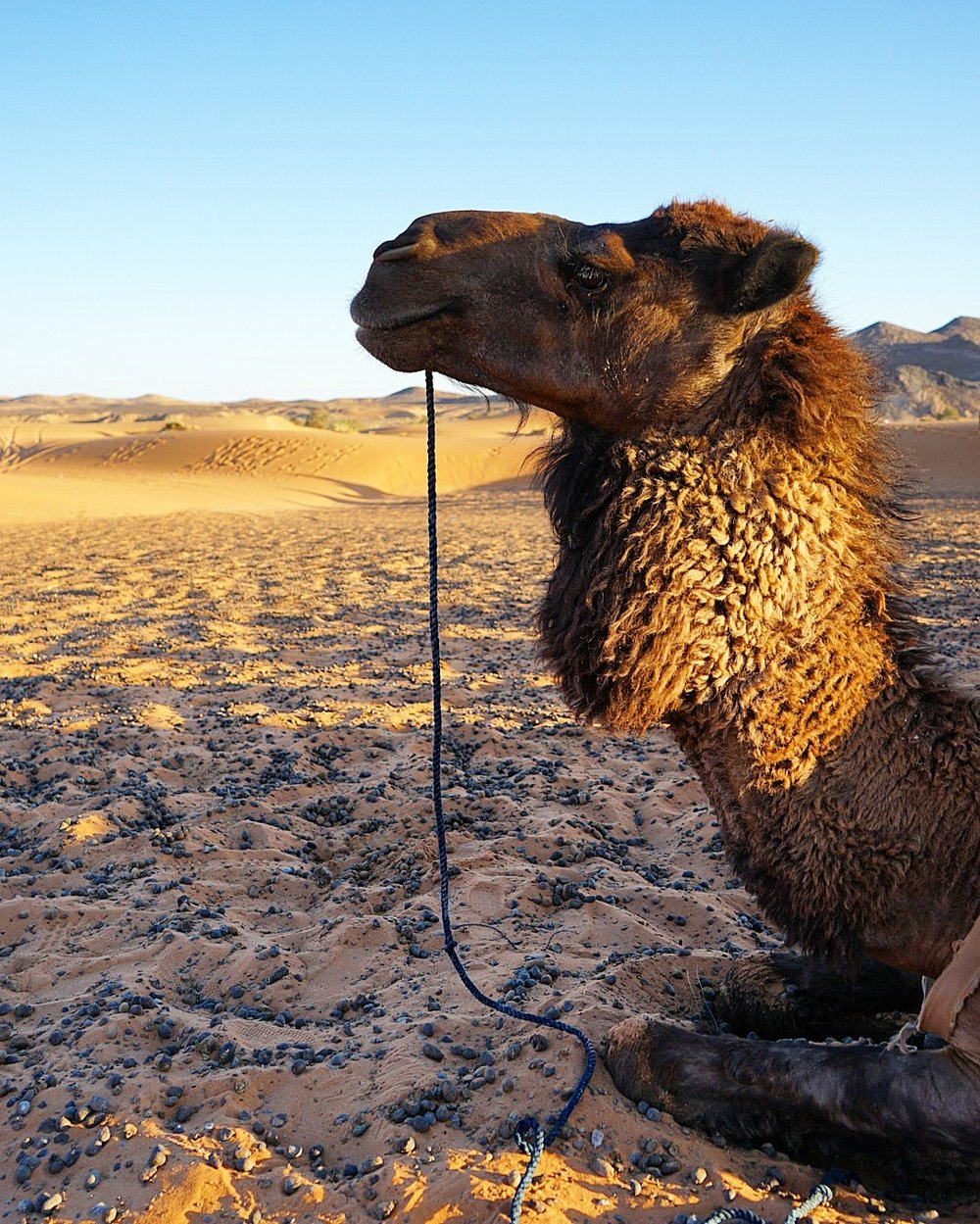 """All those little """"rocks"""" are actually camel poops"""