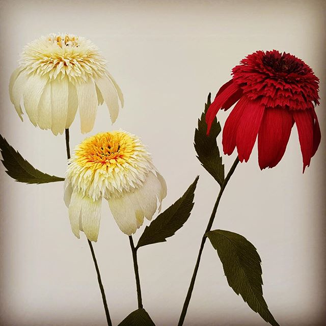Three little maids, rather,  Echinacea blossoms. They remind me of lop eared bunnies and things that grow in the land of Oz. Hat tip to @tiffanieturner and her amazing book #thefineartofpaperflowers.  #crepepaperflowers #castleintheairshop #addictedtocrepepaper #flowers #lopearedrabbit #wizardofoz #creativedharma #paperflowers #smittenwithcrepepaper