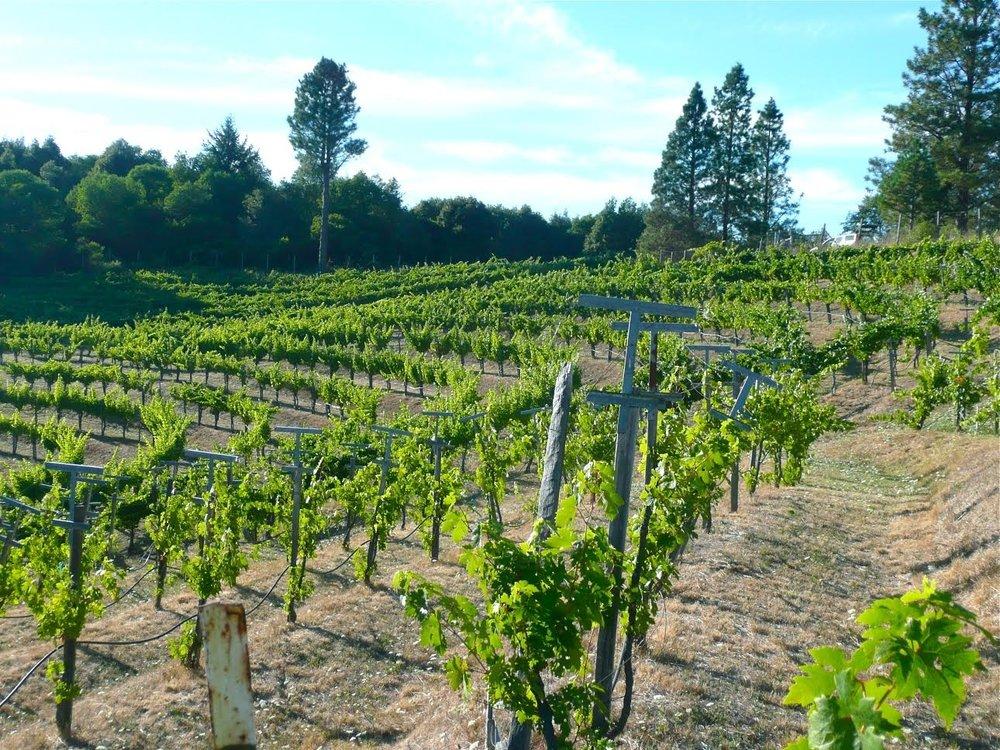 briceland vineyards - 5959 Briceland Road, Redway707.923.2429bricelandvineyards.com