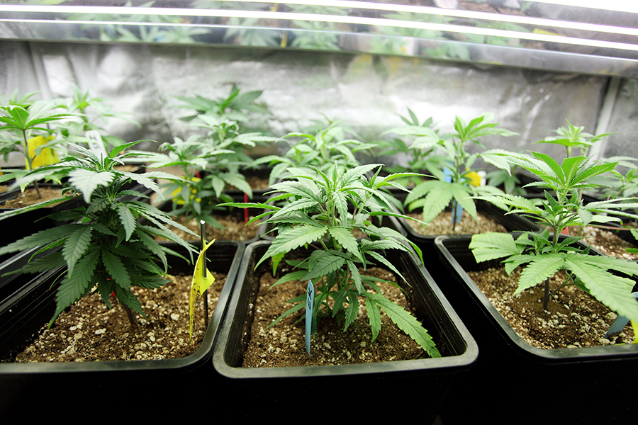 wonderland nursery - We are Wonderland Nursery. Humboldt County's premier dispensary of high quality clones. Open in Garberville from 10-4 Tuesday through Saturday. Find out more here.
