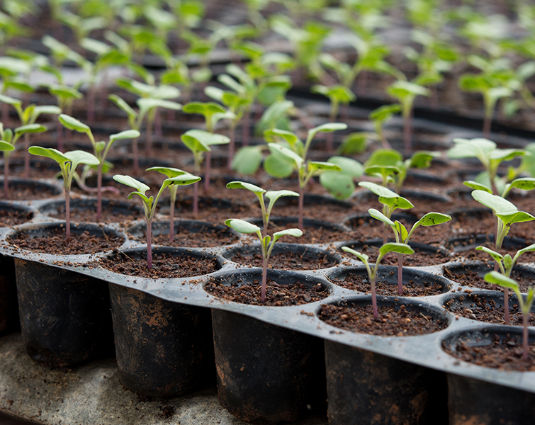 Root 101 nursery - Whether you are looking for indoor or outdoor gardening supplies, you can rely on quality products from Root 101 Nursery.350 Sprowel Creek Rd.