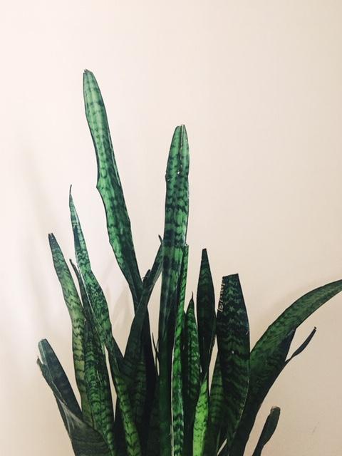 plant-3.jpeg