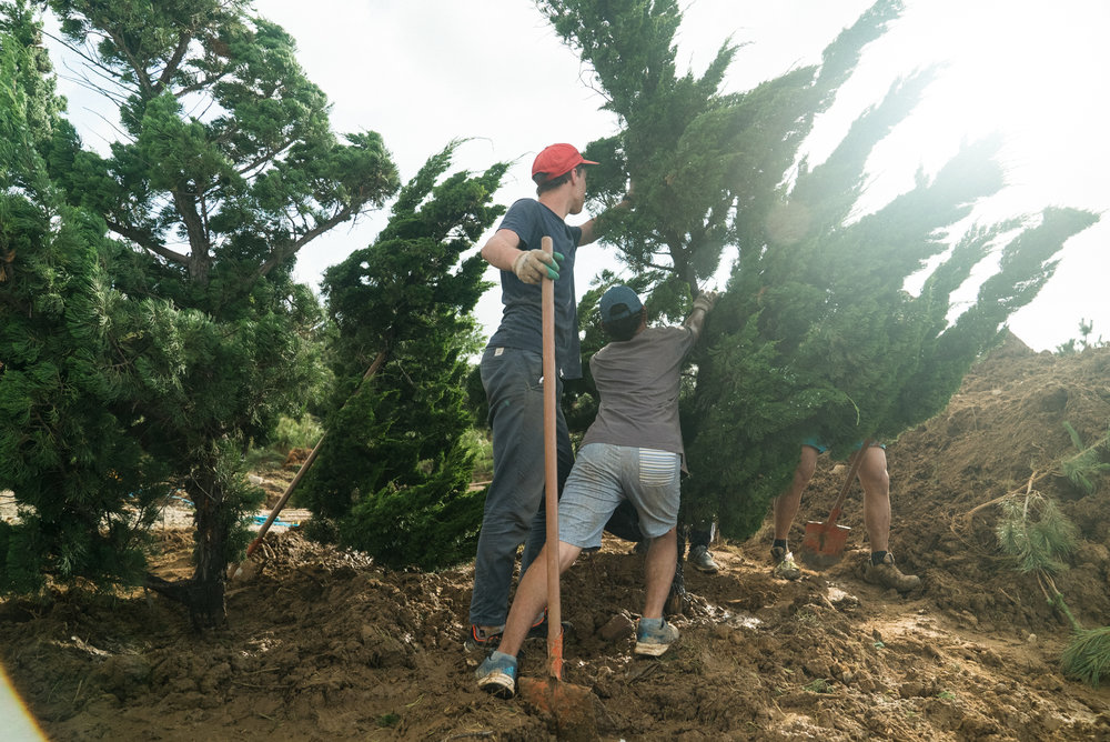 Moving Trees Around the Site
