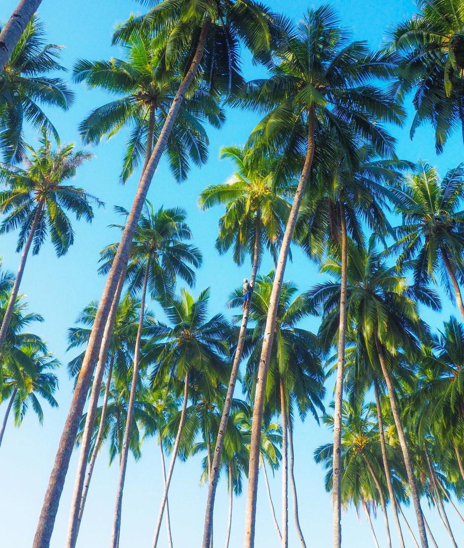 25Surfing_Village_TeloSML.jpg