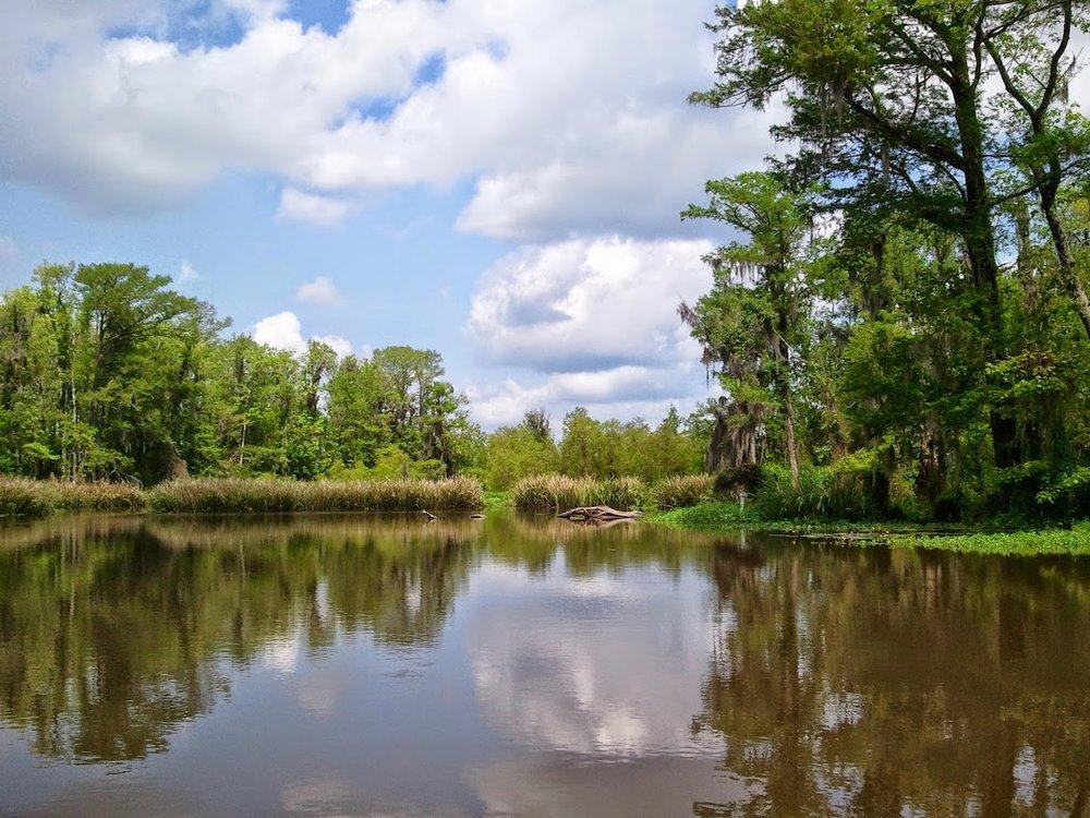 Swamplands -
