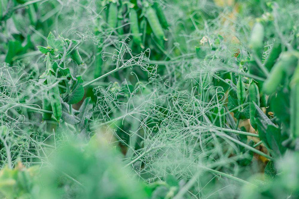 flourish-retreat