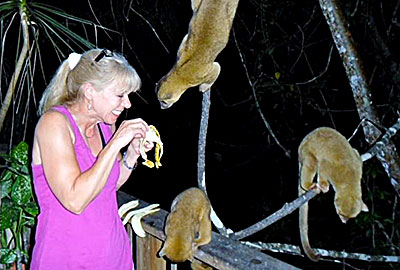 KINKAJOUS - These friendly nocturnal animals appear nightly on the deck for their banana snack.