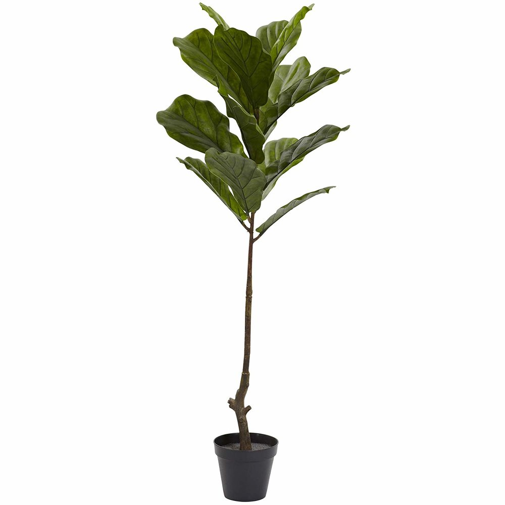 BR Fig Tree.jpg