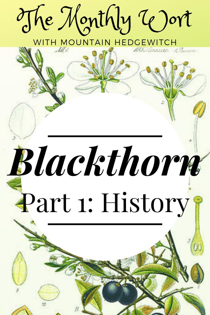 MW Blackthorn pin 1.png