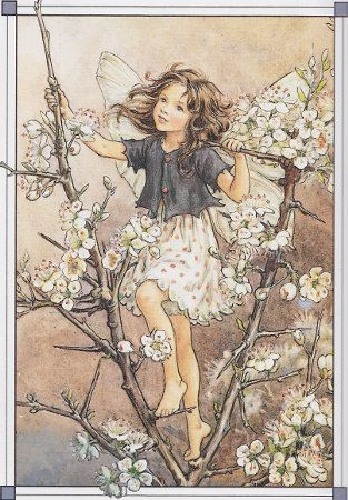 The Blackthorn Fairy by Mary Cicely Barker