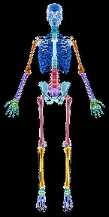 skeleton-2277446_960_720.png