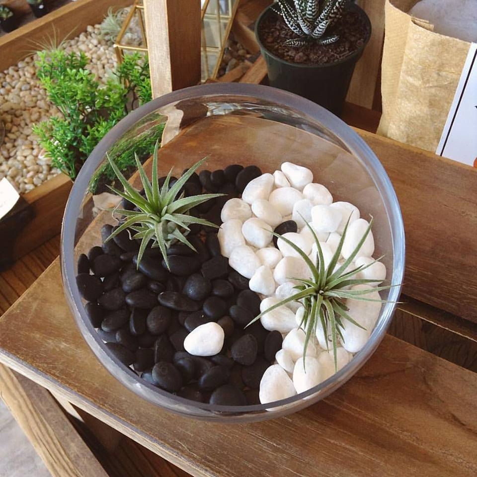Create an interesting twist on an ordinary terrarium by choosing a theme for yours. This client chose the yin and yang theme, and used air plants to complete it. Other clients have created pieces for new born baby's, wedding gifts or housewarming presents for the living room table!