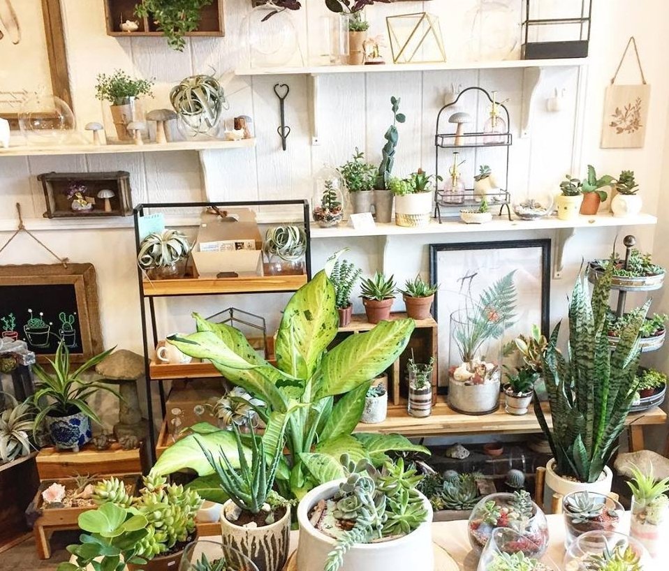 This photo was taken at Eat Shop Rock this past year. It's a little sneak peek into what we offer here and all of the different varieties of plant goodies we have.