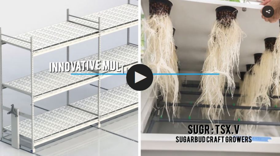 SugarbudVideoImage.JPG