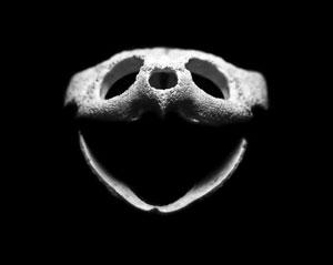 TQK_Skulls_Turtle_300.jpg