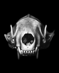 TQK_Skulls_Cougar_300.jpg