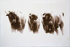 TQK_Three_Buffalo_Encaustic_300.jpg