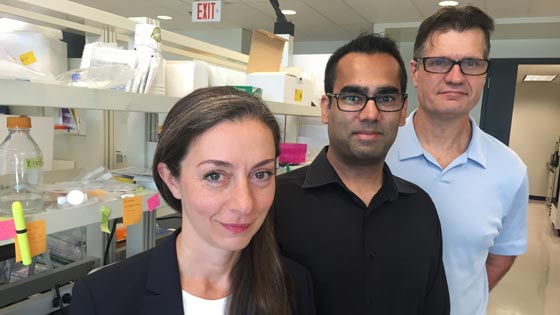Dr. Gelareh Zadeh, Head of Surgical Oncology at UHN, along with Scientific Associate Dr. Sameer Agnihotri and Senior Scientist Dr. Ken Aldape, both of the MacFeeters-Hamilton Neuro-oncology Program