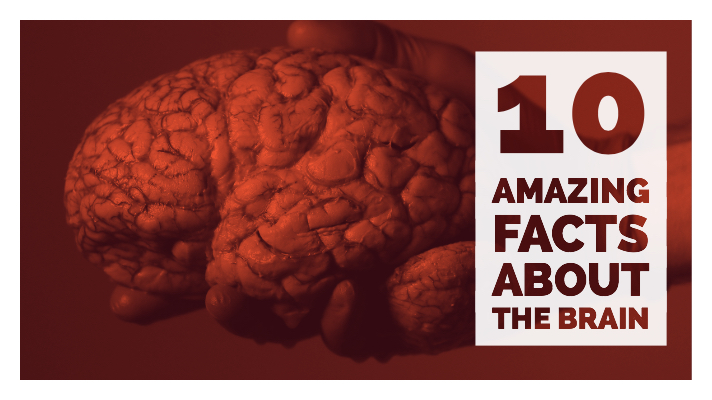 10 facts about the brain