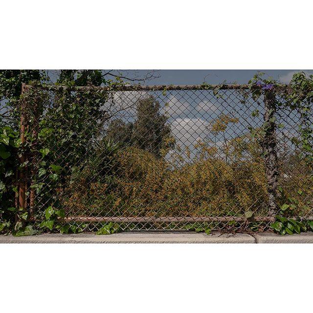 Morning Greens  #viewfinder #archivecollectivemag #subjectivelyobjective #imaginarymagnitude  #solarcollective #fivesixmag #eyeshotmag #ourmomentum #fisheyelemag #broadmag #documentingspace #urbanplants #magnumphotos #street_life #hikaricreative #helloicp #spicollective #losangelesstreets #myspc #plants #foammagazine