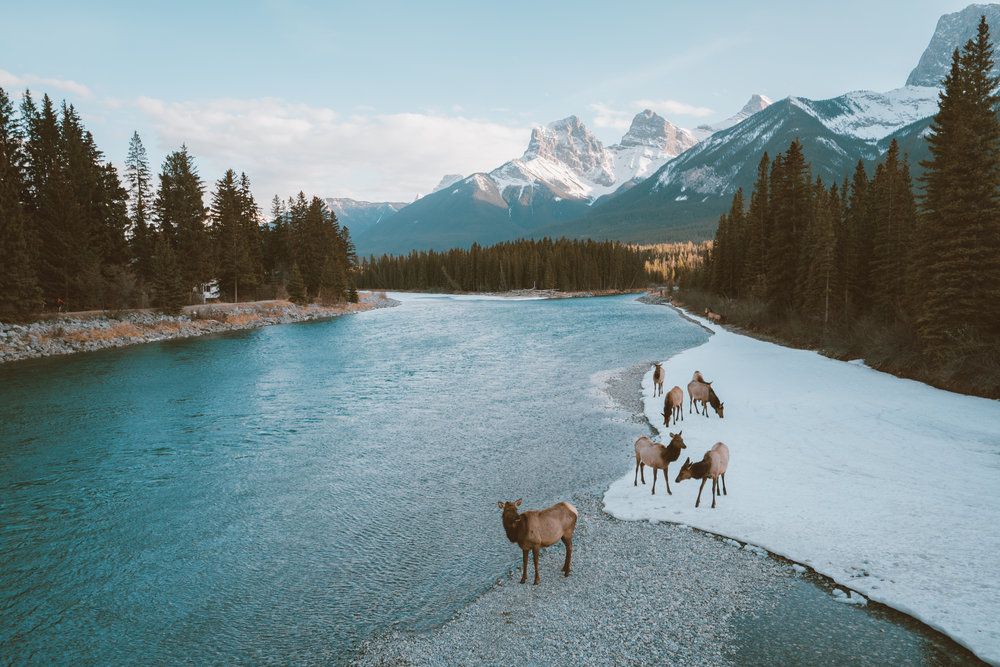 Springtime in Banff - Free from the crowds of the summer and the sub-zero temperatures of winter, Springtime in Banff is a great time of year to experience the Canadian Rockies coming to life.
