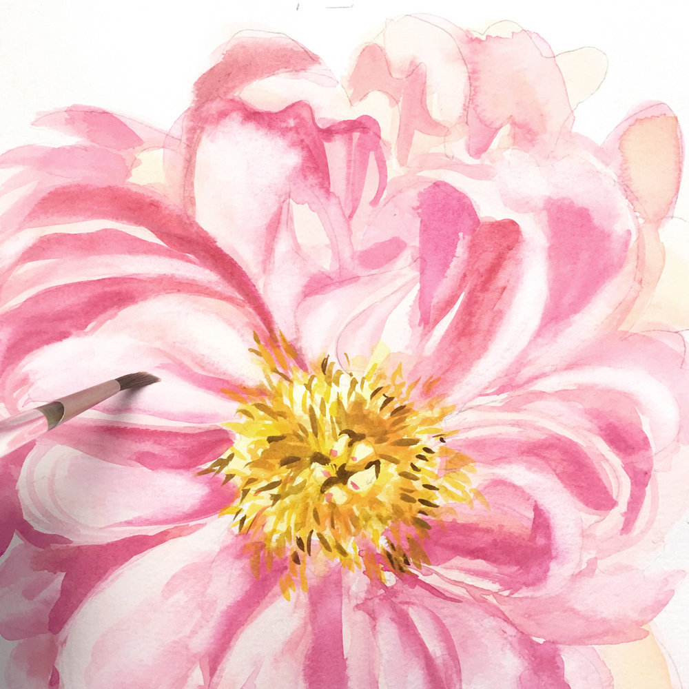 peony-flower.jpg