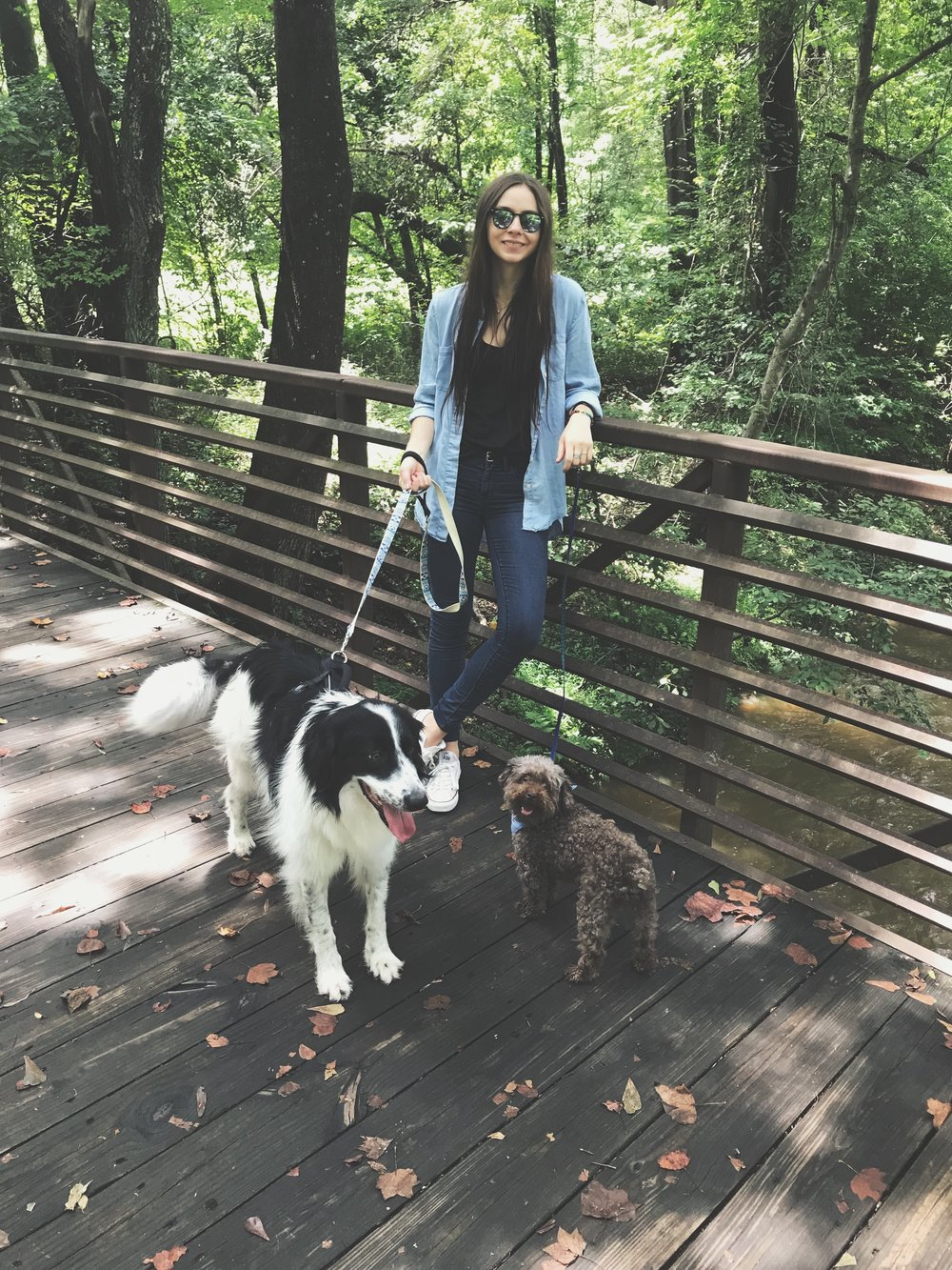 border collie, australian shepherd, poodle, hiking, chronic illness blog, holistic wellness blog, lifestyle blog