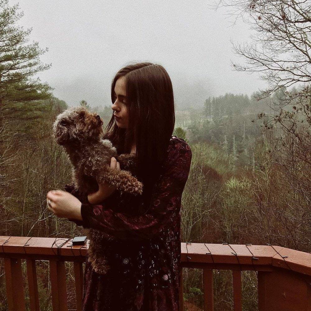 mountains, fall, winter, fog, miniature poodle, long hair, indie style, bohemian