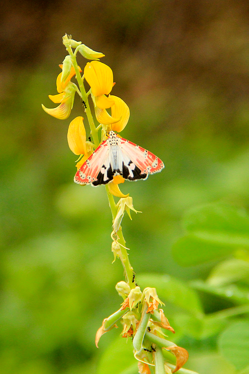 Butterfly-IMG_7750.png