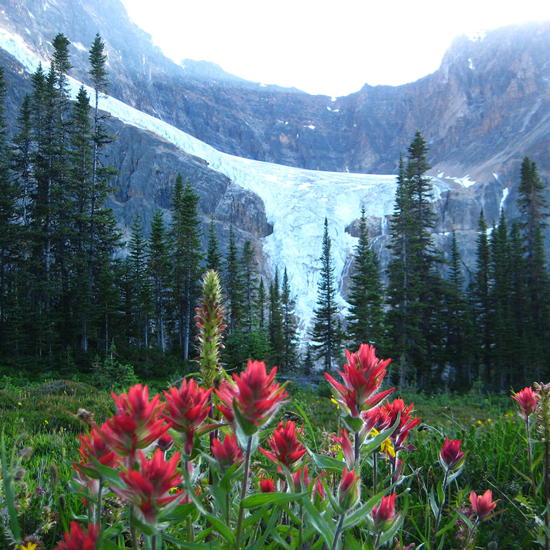 CAVELL MEADOWS -